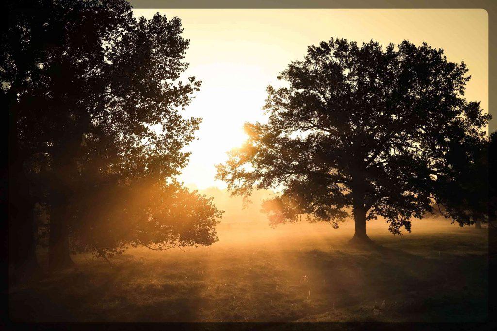 Wilde Linde, Leipzig, Wildnispädagogik, Naturpädagogik, Umweltbildung, Waldtag, Projekttag, Natur, Wildnis, Muldenaue, Jahreszeiten, Dübener Heide, Muldental, Kindergeburtstag