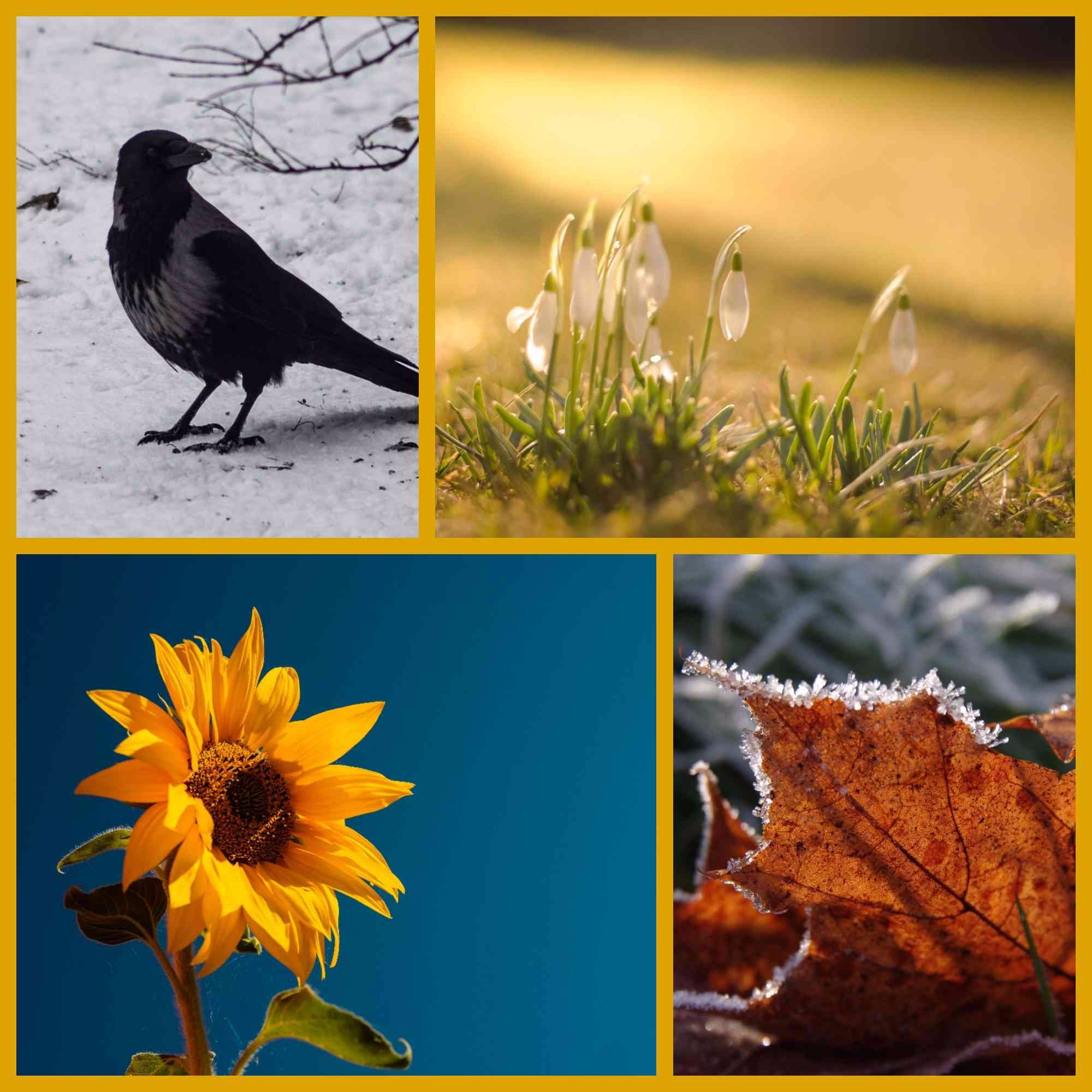 Durch die Jahreszeiten   Wilde Linde