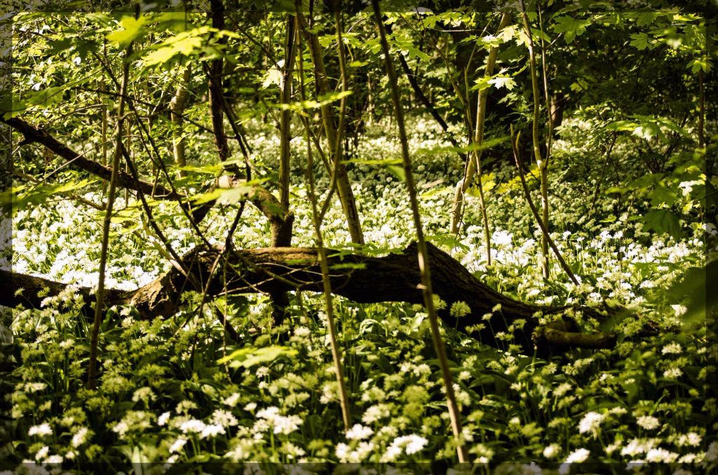 Wilde Linde, Leipzig, Wildnispädagogik, Naturpädagogik, Umweltbildung, Waldtag, Projekttag, Natur, Wildnis, Auwald, Auenwald, Dübener Heide, Muldental, Kindergeburtstag