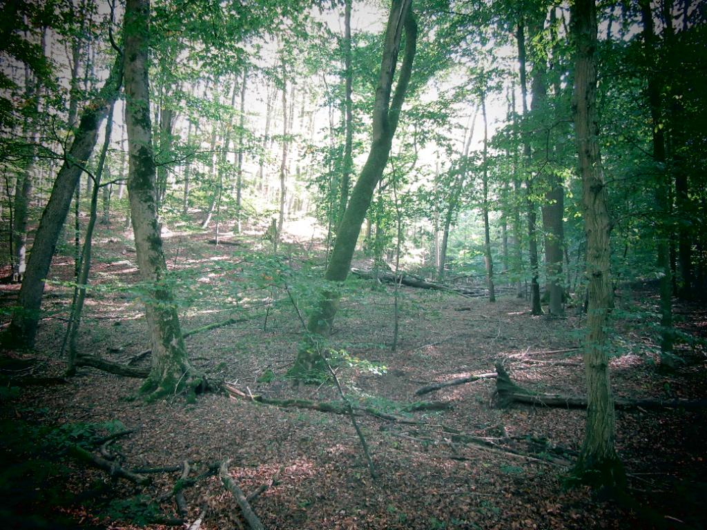 Wilde Linde, Leipzig, Wildnispädagogik, Naturpädagogik, Umweltbildung, Natur, Wildnis, Wildes Wissen, Nationalpark Hainich