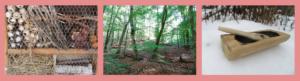 Wilde Linde, Leipzig, Wildnispädagogik, Naturpädagogik, Waldtag, Projekttag, Natur, Wildnis, Landart, Insekten, Wolf, Biodiversität, Wildkatze, Müll, Klimawandel, Dübener Heide, Muldental, Umweltbildung, BNE, Bildung für nachhaltige Entwicklung